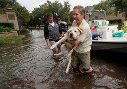 hurricane-harvey-rescuing-dog.jpg
