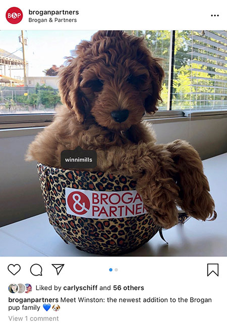 Brogan employees goldendoodle in the office.