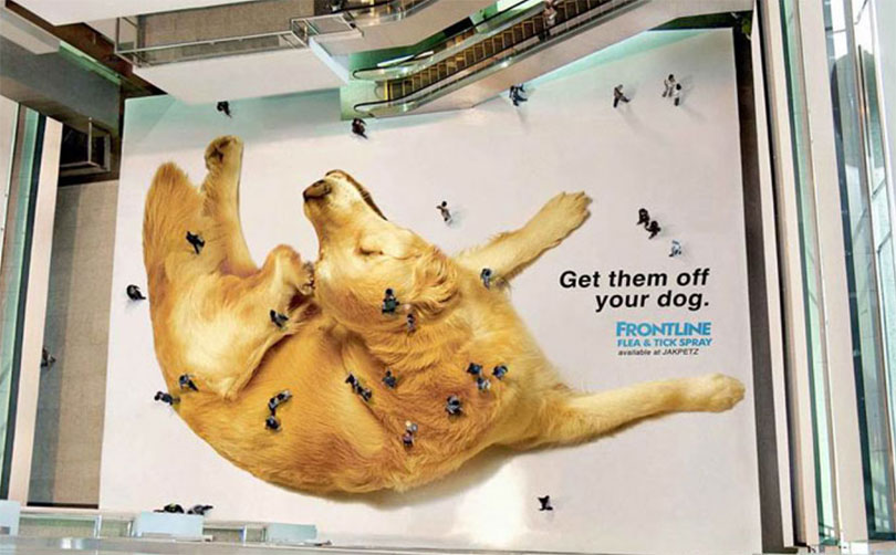 Frontline Giant Dog